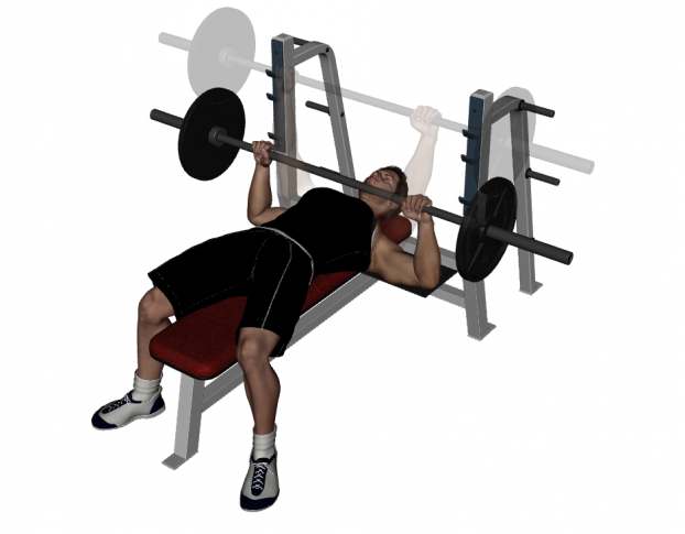 Bench Press Exercise 28 Images Search Results For