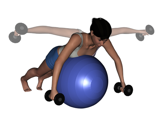 Stability Ball And Dumbbell Exercises 96