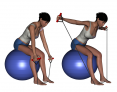 Bilateral Bent-Over Reverse Fly on Stability Ball
